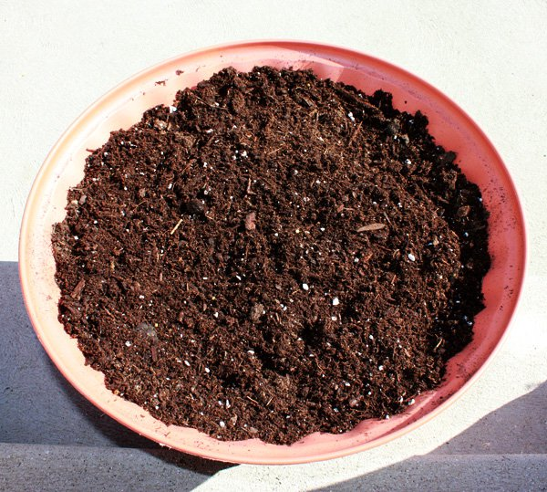 pot-of-soil